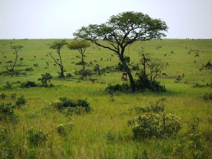 savannah-1546116_1280.jpg